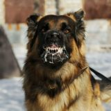 โรคพิษสุนัขบ้า ร้ายแรง แต่ป้องกันได้