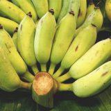 คุณประโยชน์ของกล้วย