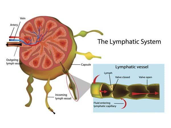 -Lymphatic-system.jpg