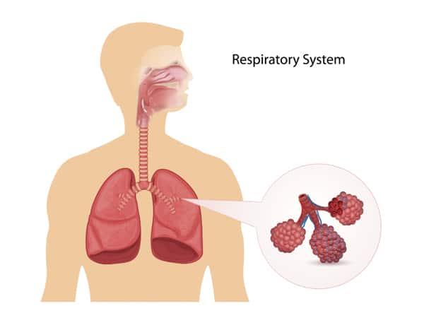 ระบบหายใจ-Respiratory-system.jpg