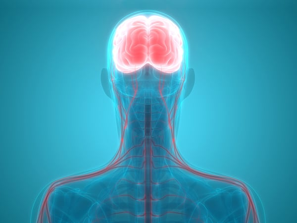 ระบบประสาท Nervous system